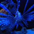 test-fairphone-aquarium-0003