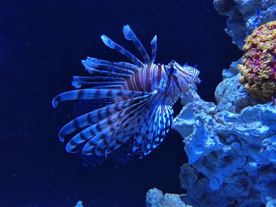 test-fairphone-aquarium-0004