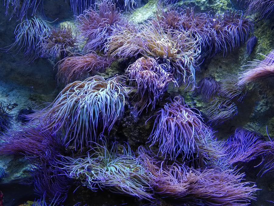 test-fairphone-aquarium-0006