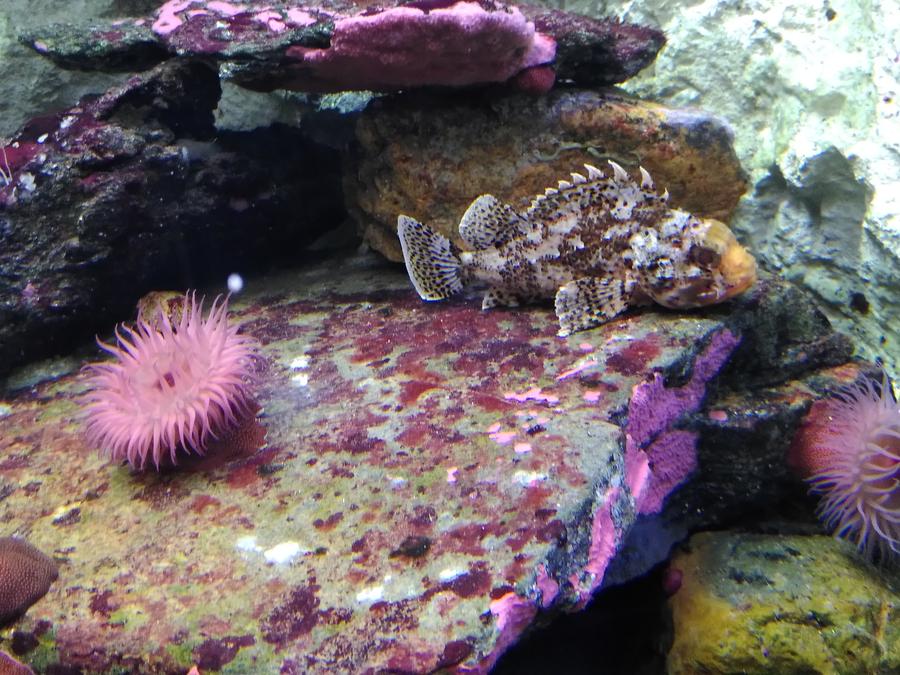 test-fairphone-aquarium-0008