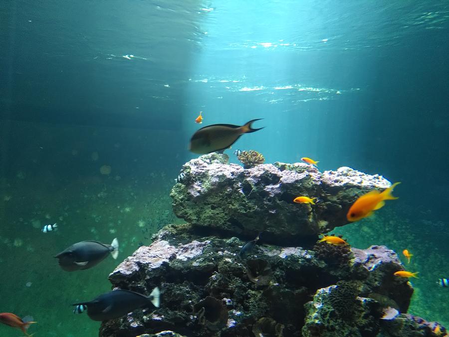 test-fairphone-aquarium-0013
