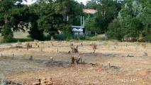 arbres-hg2-02