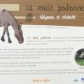texte mule