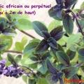 africain