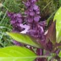fleur près