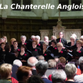 chanterelle-angloise-001