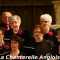 chanterelle-angloise-003