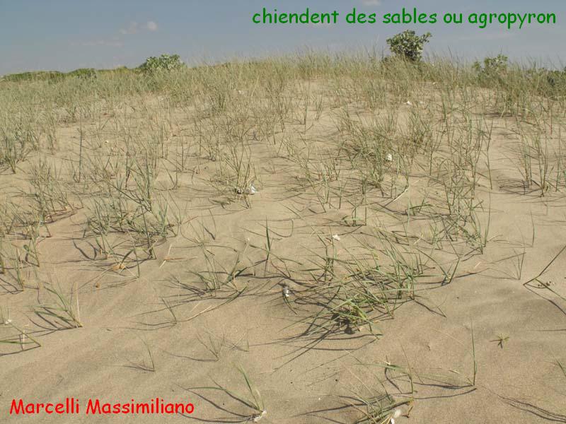 cheindent