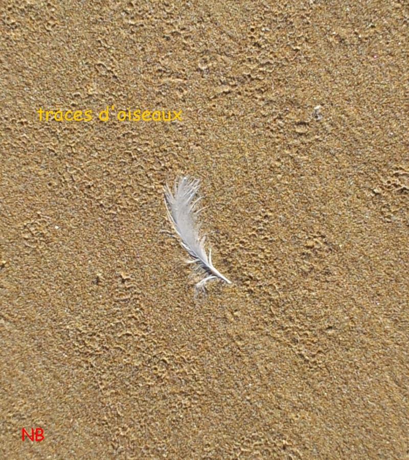 traces oiseau