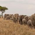 elephantq