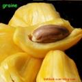graine