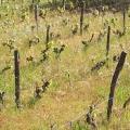 crapa vigne pres