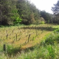 crpa vigne
