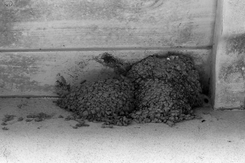 nids en cours